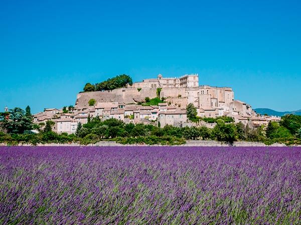 Kanpai Tourisme - Lavender in Bloom & Grignan