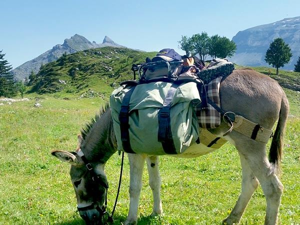 Kanpai Tourisme - Walk with a donkey