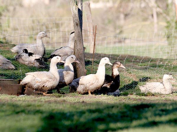 Kanpai Tourisme - Foie Gras