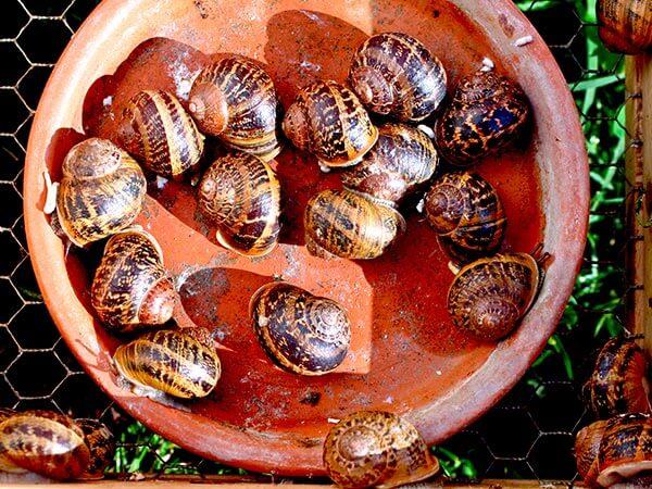 Kanpai Tourisme - Snails Farms