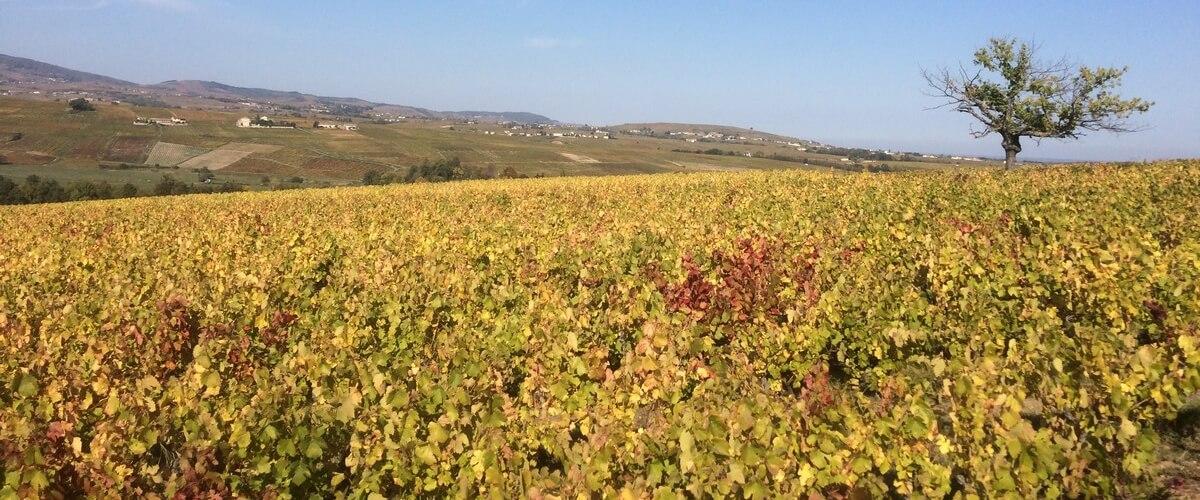 wine-tour-lyon-beaujolais