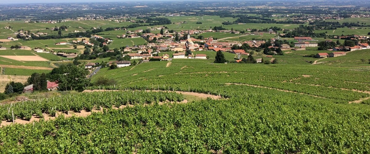 beaujolais-wine-country-tasting
