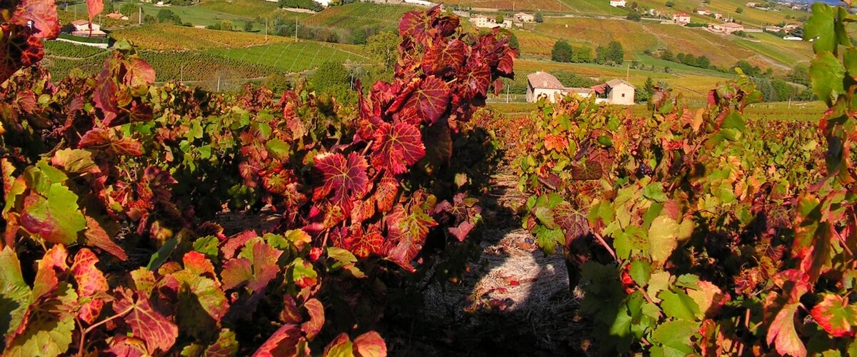 winery-beaujolais-tour