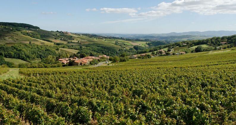 beaujolais-landscape