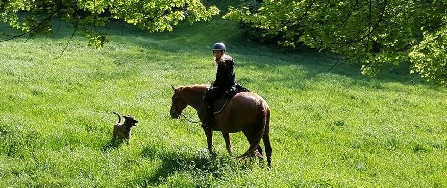 horse-riding-beaujolais