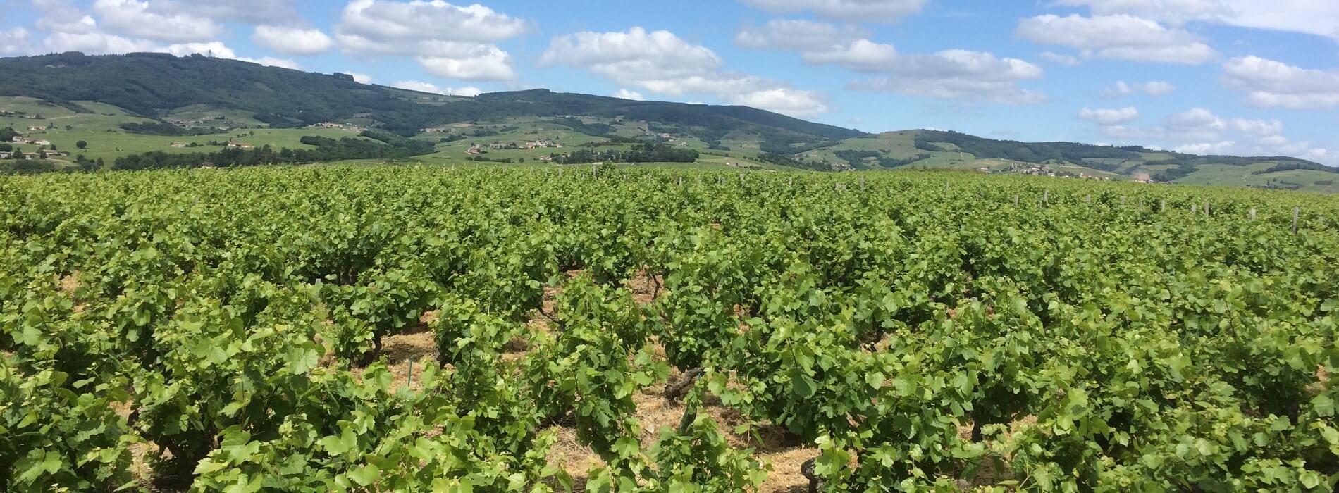 Kanpai Tourisme - Visits to Lyon Vineyards