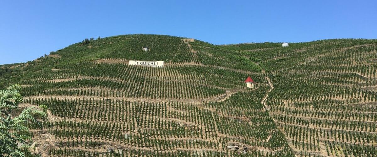 cote-rotie-vineyards