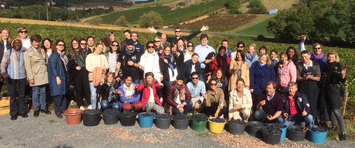 team-building-grape-picking