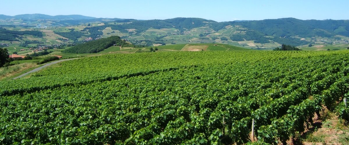 beaujolais-wine-country
