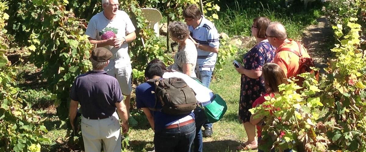 winery-visit-cote-rotie