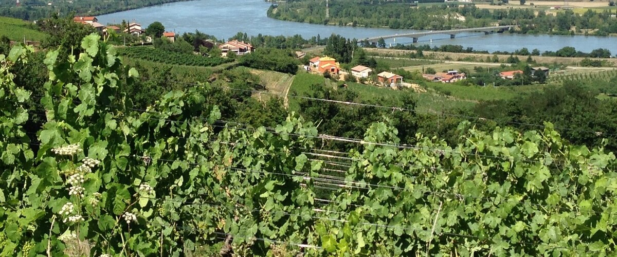rhone-valley-wines-lyon