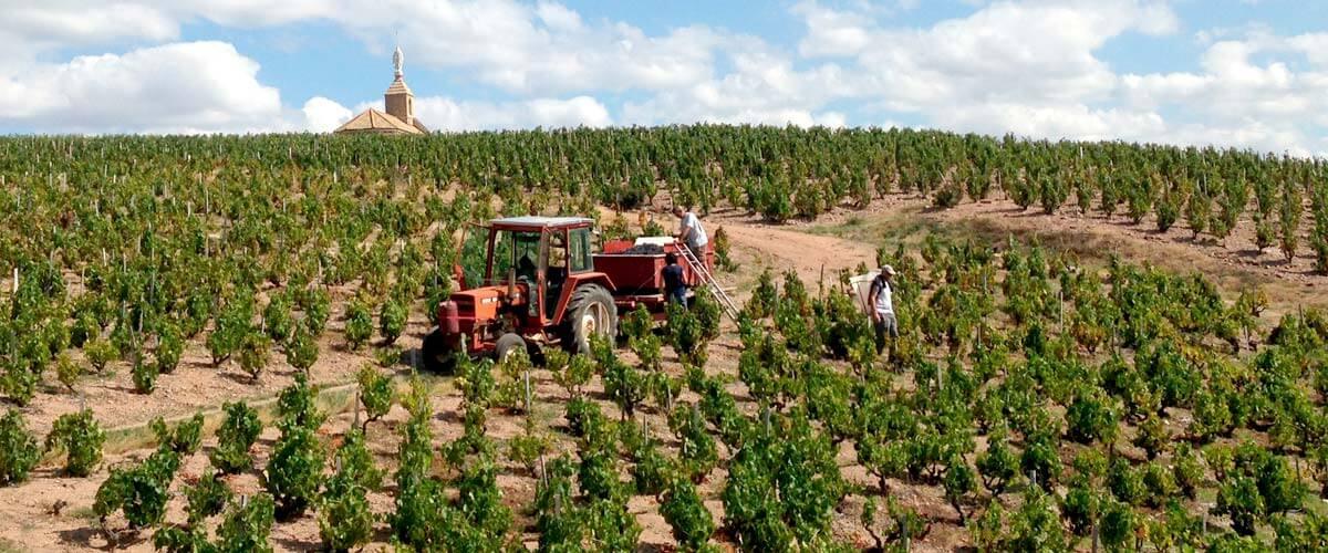 beaujolais-fleurie-wine