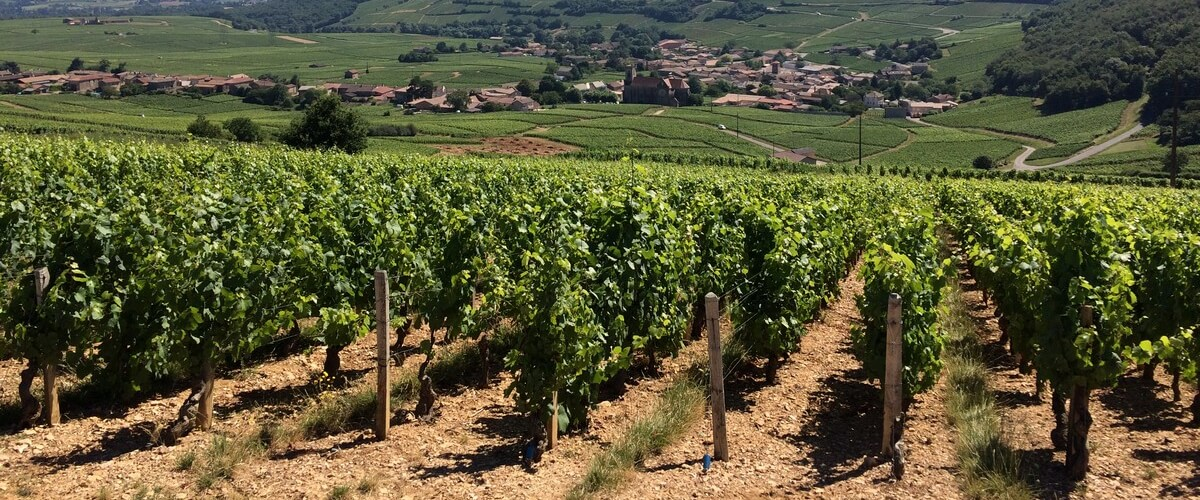 wine-pouilly-fuisse-lyon