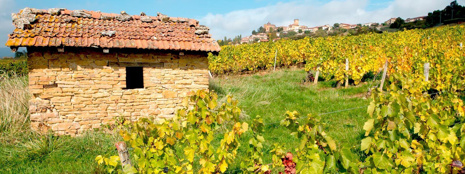 Kanpai Tourisme - Beaujolais Nouveau Wine Tour - Afternoon