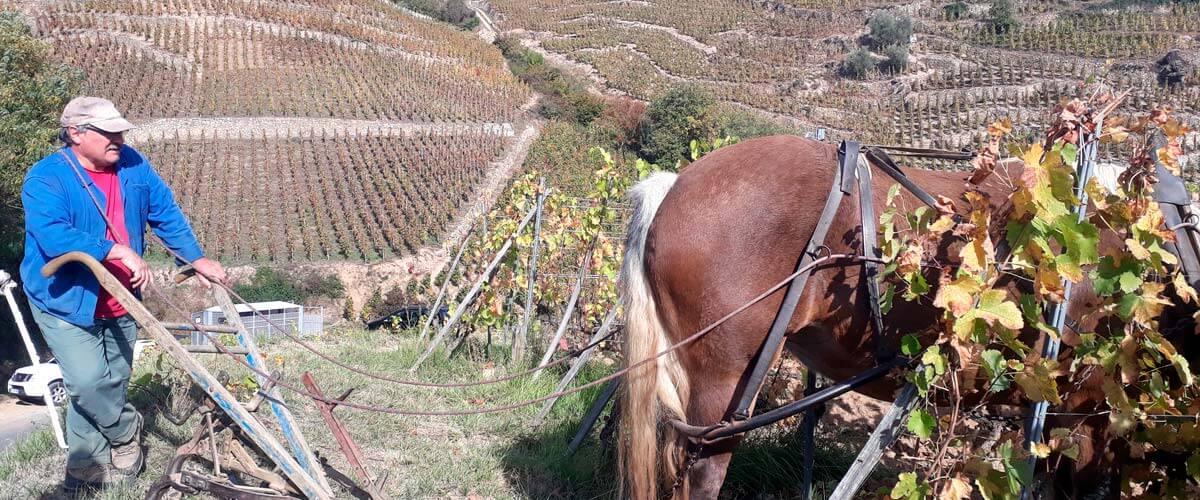 Découvertes des Côtes du Rhône