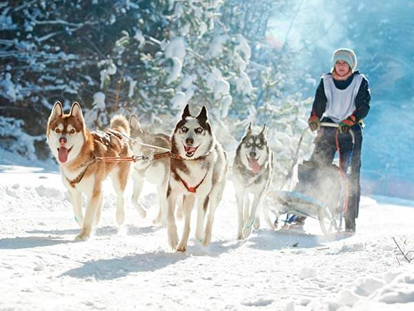 Kanpai Tourisme - Dog Sledding