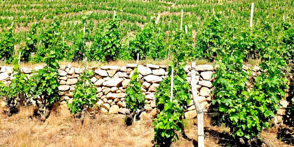 vallée du Rhône nord 1